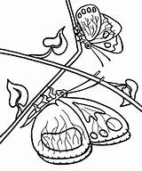 Coloring Butterfly Pages Printable Simple Butterflies Drawing Colour Bestcoloringpagesforkids sketch template
