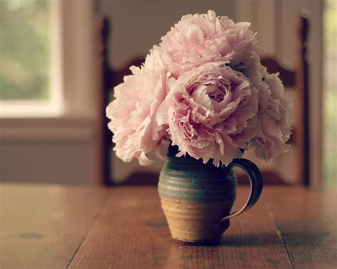 Peonijas - sezonas skaistākie ziedi ar maģiskām spējām ...