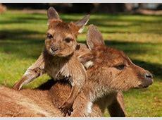 Découverte des animaux Sydney, Rencontre animaux Sydney