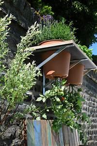 Kräuter Pflanzen Topf : do it yourself tomaten anpflanzen haengekultur ~ Lizthompson.info Haus und Dekorationen