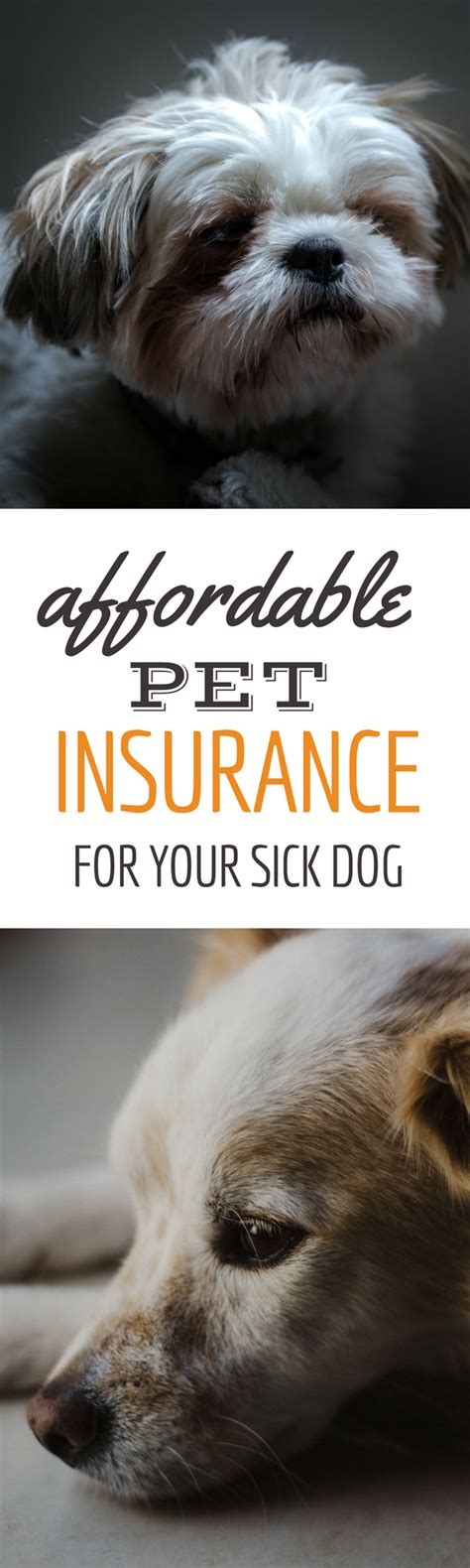 Huge savings on tests, vaccines and essential care. Pet Insurance Reviews 2020: Cost & Coverage Comparisons   Pet insurance reviews, Dog insurance ...