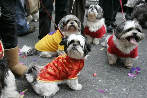 Doggies In  Chinatown  Ee  Nyc Ee   Lunar New Year Parade Flickr