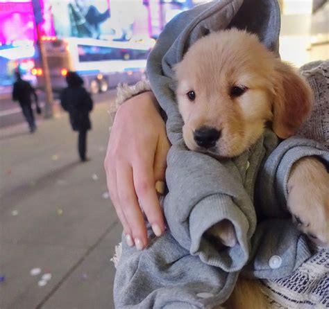 Alex Pall Pets - Celebrity Pet Worth