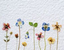 dried flowers craft ideas 25 best ideas about pressed flower craft on 4287