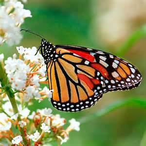 Butterfly Garden Plants and Flowers