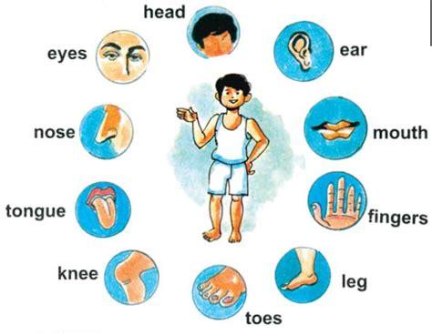 Worksheet For Kindergarten My Body Islamic Clipart Clipground