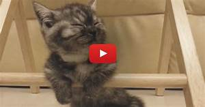 When This Kitten Gets Tired, Just Watch How He Handles It ...