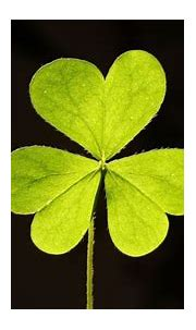 Why You Shouldn't Use the Four-Leaf Clover Emoji Today ...