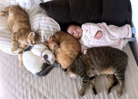 cats and newborns pic pictures baby sleeping with cat cat