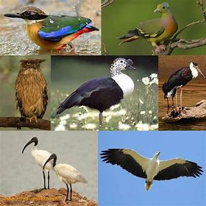 Largest mangrove forest: Sundarbans - Save Our Green