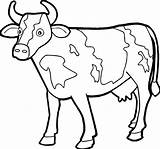 Coloring Pages Cow Face Cows Printable Getcolorings sketch template