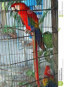 Cage A Perroquet : perroquet mis en cage image stock image 37968591 ~ Teatrodelosmanantiales.com Idées de Décoration