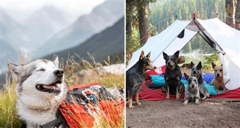 camping  dogs   instagram   knew  needed