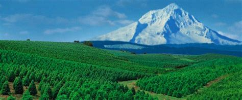 christmas tree farms near mt hood 1000 images about trees pacific northwest style on trees