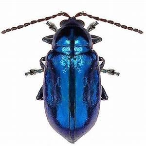 Bright Blue Beetle Vinyl | True Blue | Pinterest | Blue ...
