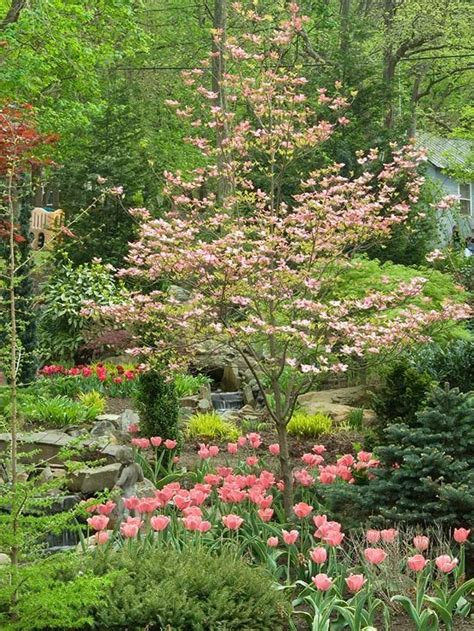 pink dogwood tree care 25 b 228 sta small shrubs for shade id 233 erna p 229 pinterest skuggtr 228 dg 229 rd blommor tr 228 dg 229 rd och