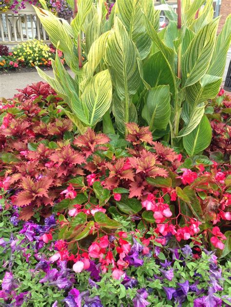 coleus garden 387 best coleus images on pinterest flowers garden patio plants and flower pots