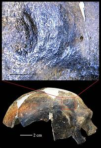 Bashed Skull Is Earliest Evidence Of Human Aggression