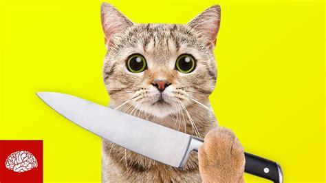 sind katzen gnadenlose killer