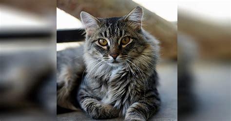 beautiful cats   furever homes