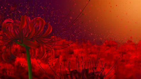 guide  flower symbolism red spider lily wattpad