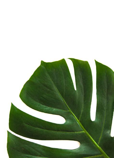 interesting leaf  pexels  stock