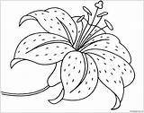 Lily Flower Pages Coloring sketch template