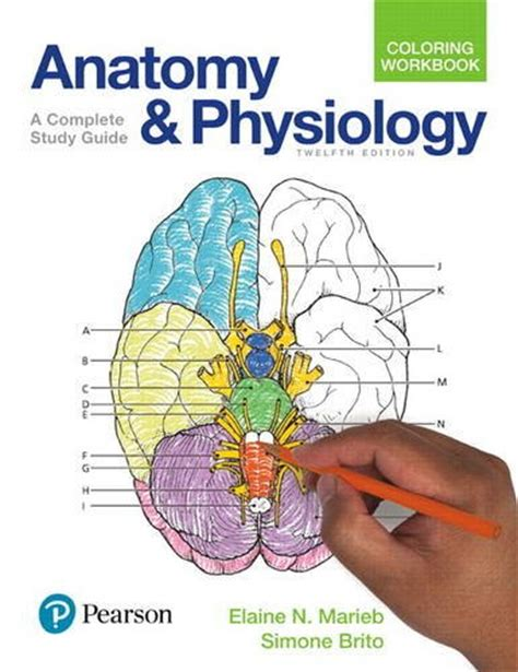 anatomy  physiology coloring workbook  edition