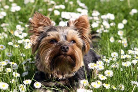 Pflanzen Die Hunde Nicht Mö by Pflanzen Gegen Hunde Verpiss Dich Pflanze Stoppschild F R