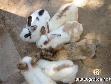 chambre hote ouessant photo lapins en groupe photos animaux de la ferme monaco