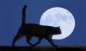 Full Moon People