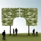 taille en marquise et rideau d un arbre