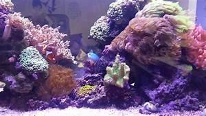 Aquarium Als Raumteiler : meerwasser aquarium als raumteiler youtube ~ Michelbontemps.com Haus und Dekorationen