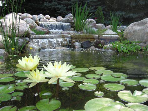 ponds pictures bellas aquatic gardens miami s premier pond contractor bellas aquatic gardens miami s