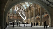 An insider's guide to the Natural History Museum | Evan ...