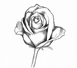 Dessin De Rose Facile à Faire Comment Dessiner Une Rose
