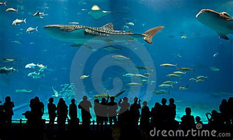 largest aquarium in the us world s largest acrylic aquarium stock image image 4351331