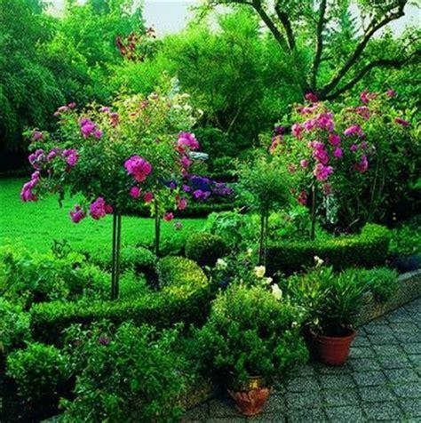 25 best ideas about rosier en pot sur arbuste 224 fleurs blanches amandier en fleurs