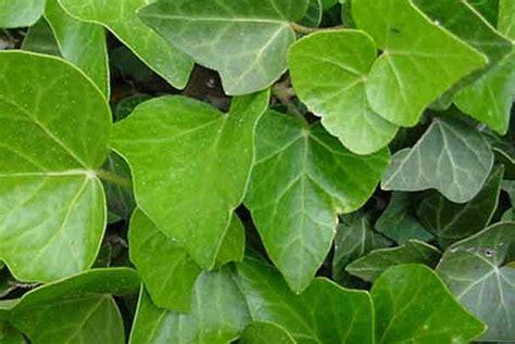 comment maintenir l humidit 233 des plantes vertes