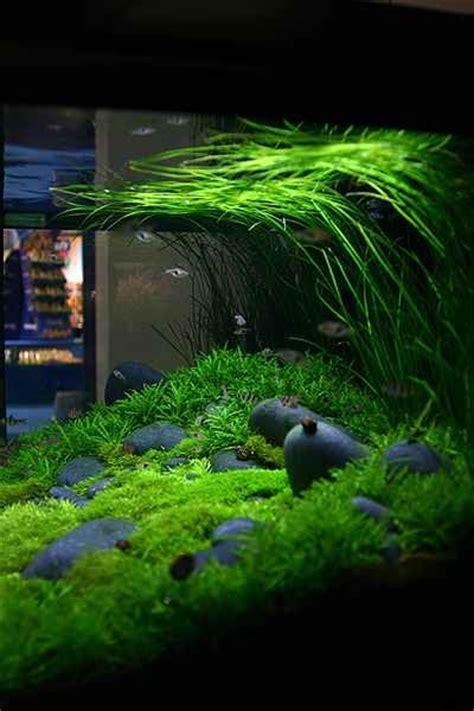 Riverbed  Aquascarping  Pinterest  Aquarium, Grass And