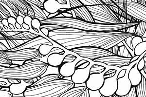 Image Gallery kelp drawing