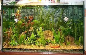 Aquarium Einrichten 60l : endlich steht es unser aq 80 60 42 achtung lang ~ Michelbontemps.com Haus und Dekorationen