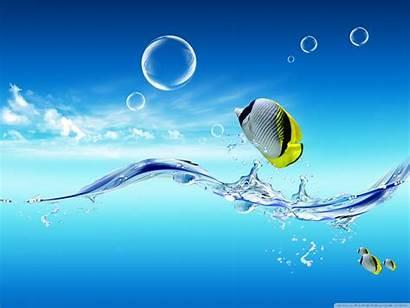 Desktop Fish Water