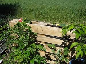 Bauen Auf Lehmboden : vertikaler garten wir bepflanzen eine europalette ~ Markanthonyermac.com Haus und Dekorationen