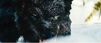 Grey Wolf Animated Favim Newbeginnings2
