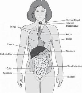 Human Body Diagrams   Human Body Diagrams Awesome Simple