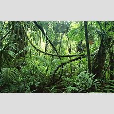 31 Jungle Hd Wallpapers  Backgrounds  Wallpaper Abyss