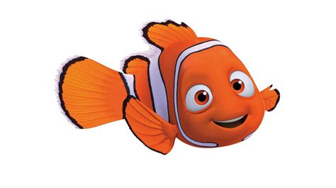 nemo fish picture  animal picture society