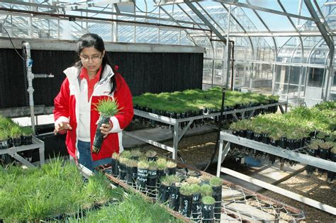 New St. Augustine Grass Hybrid Uses Less Water, Offers