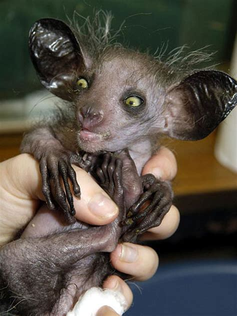 10 weird animals you have never seen or heard of Steemkr